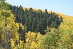 Montagne del Colorado nella caduta Fotografia Stock Libera da Diritti