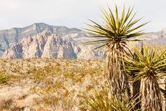 Montagne del deserto con il cactus in priorità alta Fotografie Stock Libere da Diritti