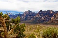 Montagne del deserto con il Evergreen Fotografia Stock