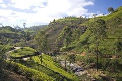 Montagne del giardino di tè della Sri Lanka Fotografie Stock