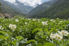 Montagne del ND del fiore in valle di Spiti Immagine Stock Libera da Diritti
