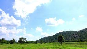 Montagne del PAESAGGIO stock footage