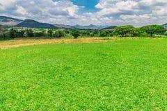 Montagne del prato del paesaggio Immagini Stock