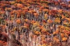 Montagne del Virginia Occidentale Immagini Stock Libere da Diritti
