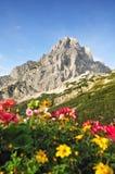 Montagne dell'alpe di estate Fotografie Stock Libere da Diritti