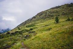 Montagne dell'Altai fotografie stock