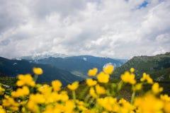 Montagne dell'Altai Flovers Fotografie Stock Libere da Diritti