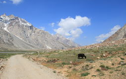Montagne dell'Himalaya in Ladakh Fotografie Stock