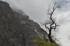 MONTAGNE DELL'UZBEKISTAN, OIGAING fotografia stock