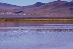 Montagne della Bolivia, altiplano Immagine Stock