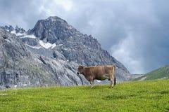 Montagne della mucca Fotografie Stock Libere da Diritti