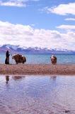 Montagne della neve del Tibet Immagine Stock Libera da Diritti
