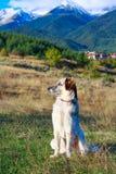 Montagne della neve e del cane bianco e nero Fotografia Stock Libera da Diritti