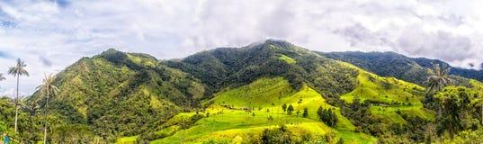 Montagne della valle di Cocora Immagine Stock