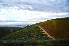 Montagne della vigna in valle Sudafrica di Stellenbosch Immagine Stock