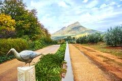 Montagne della vigna in valle Sudafrica di Stellenbosch Fotografie Stock Libere da Diritti