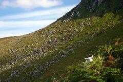 Montagne della Wicklow in Irlanda Fotografia Stock