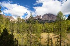 Montagne delle alpi delle dolomia, foresta del larice, Italia Immagine Stock