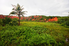 Montagne delle foreste dell'argilla rossa nel Vietnam Immagine Stock