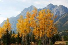 montagne delle foreste di autunno immagini stock libere da diritti