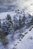 Montagne dello Snowy di Kazakhstan   Immagini Stock