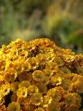 Montagne des fleurs Images stock