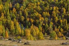 Montagne di Altai in autunno, Repubblica di Altai Immagine Stock Libera da Diritti