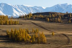 Montagne di Altai, cresta di Chuya, Siberia ad ovest Fotografia Stock Libera da Diritti