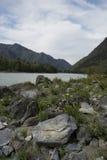 Montagne di Altai, fiume di Katun Immagine Stock