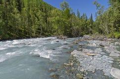 Montagne di Altai, il fiume di Kucherla Fotografie Stock