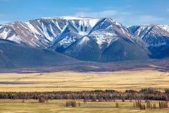 Montagne di Altai nell'area di Kurai con Chuisky del nord Ridge su backgr Fotografia Stock