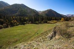 Montagne di Altai, Siberia ad ovest, Russia Corsa Fotografia Stock