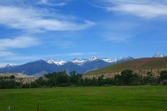 Montagne di Beaverhead - Idaho Immagine Stock