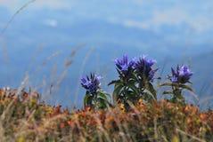 Montagne di Bieszczady Fotografia Stock