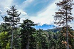 Montagne di Bucegi Fotografia Stock