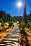 Montagne di Bucegi, prenotazione della Romania, regione paludosa di Laptici Fotografia Stock Libera da Diritti