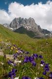 Montagne di Caucaso - gruppo della montagna di Chaukhi Fotografia Stock