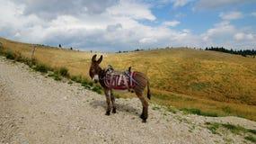 Montagne di Ciucas in Romania 9 Fotografia Stock