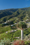Montagne di Cumbre, La Palma, isole Canarie Fotografia Stock Libera da Diritti