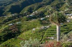 Montagne di Cumbre, La Palma, isole Canarie Fotografie Stock Libere da Diritti