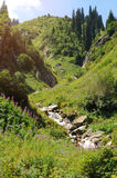 Montagne di estate con i piani verdi fotografie stock libere da diritti