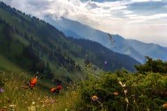 Montagne di estate Luce attraverso le nuvole immagine stock