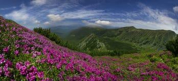 Montagne di fioritura dell'Ucraina Immagini Stock