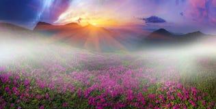 Montagne di fioritura dell'Ucraina Fotografia Stock Libera da Diritti