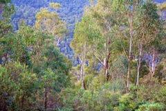 Montagne di Forest In Foreground Of Blue fotografia stock libera da diritti