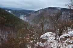 Montagne di Harz se nebbia di inverno Immagine Stock Libera da Diritti