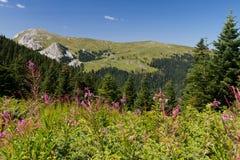 Montagne di Ilgaz Immagini Stock