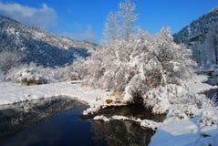 Montagne di inverno, Montana Fotografia Stock