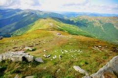 Montagne di Karapaty coperte di erba verde fotografia stock libera da diritti