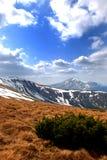 Montagne di karpaty Fotografia Stock